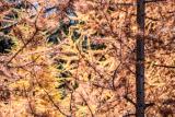 automne2018rdaniel-16-6725701